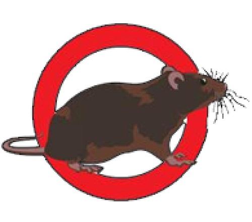 Dịch vụ diệt chuột uy tín Bình Đan