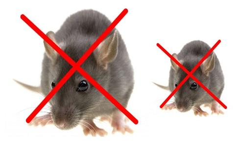 Liên hệ công ty diệt chuột tại Hà Nội 0974587282