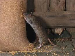 Bước 2: Ngăn chặn chuột xâm nhập lại 1