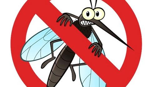 Mẹo diệt côn trùng trong nhà hiệu quả