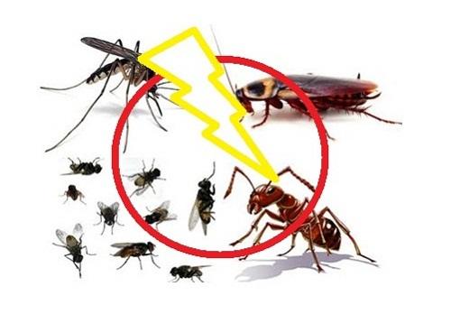 Hướng dẫn diệt côn trùng trong nhà