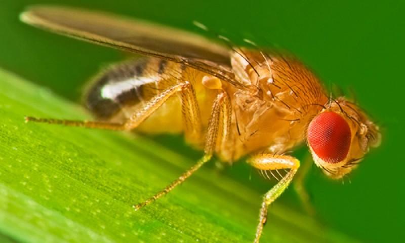 Hướng dẫn cách diệt ruồi giấm trong nhà vệ sinh