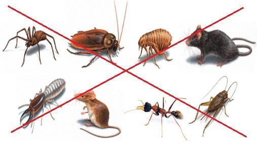 Hướng dẫn diệt côn trùng gây hại trong nhà