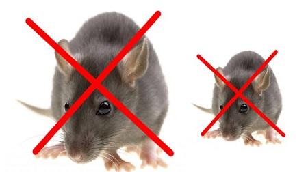Gợi ý mẹo đuổi chuột ra khỏi nhà đơn giản