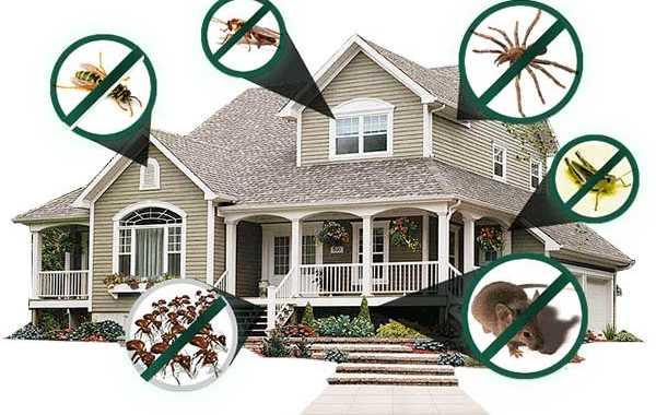 Giá dịch vụ diệt côn trùng tại nhà?