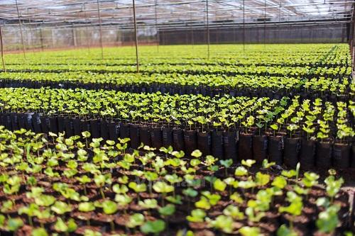 Phòng chống mối vườn ươm hiệu quả