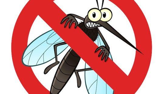 Tư vấn cách đuổi muỗi hiệu quả nhất