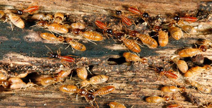 Các phương pháp diệt côn trùng giá rẻ