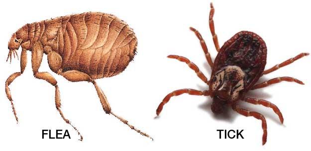 Cách chống côn trùng vào nhà