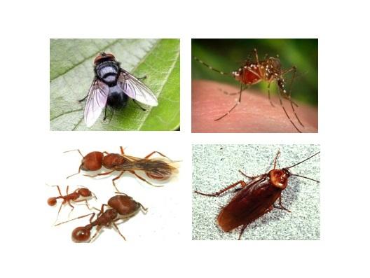 Các loài côn trùng gây hại